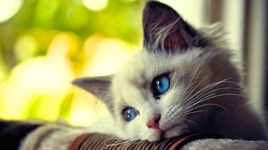 La tristeza también tiene beneficios - Google Images